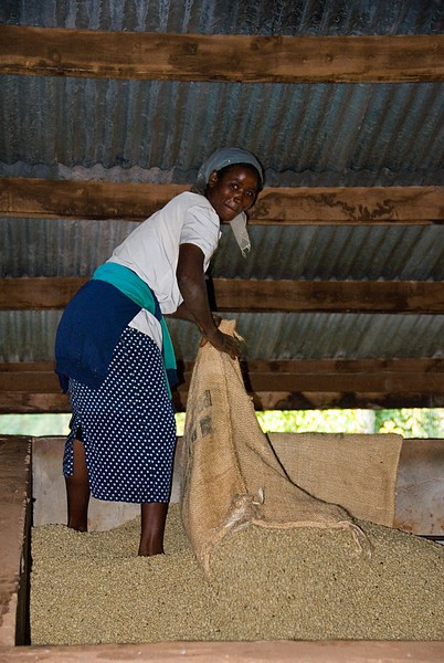 She is receiving the dried beans, still in parchment, above.  Over the next few weeks the beans will dry still further and stabilize.  They will then be ready for final preparation and packaging before export - or roasting in Kenya.