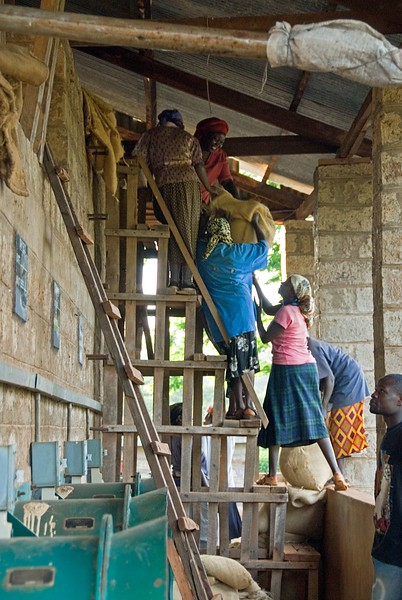 Women lifting dried beans into conditioning bins above.