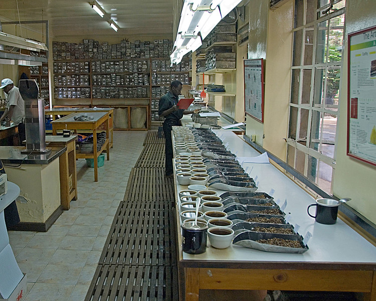 This is C Dorman's main cupping lab.  At the height of the coffee buying season several hundred coffees might be cupped in a single week.  There are two cups for each coffee lot.  Finer coffees may be roasted and cupped several times.