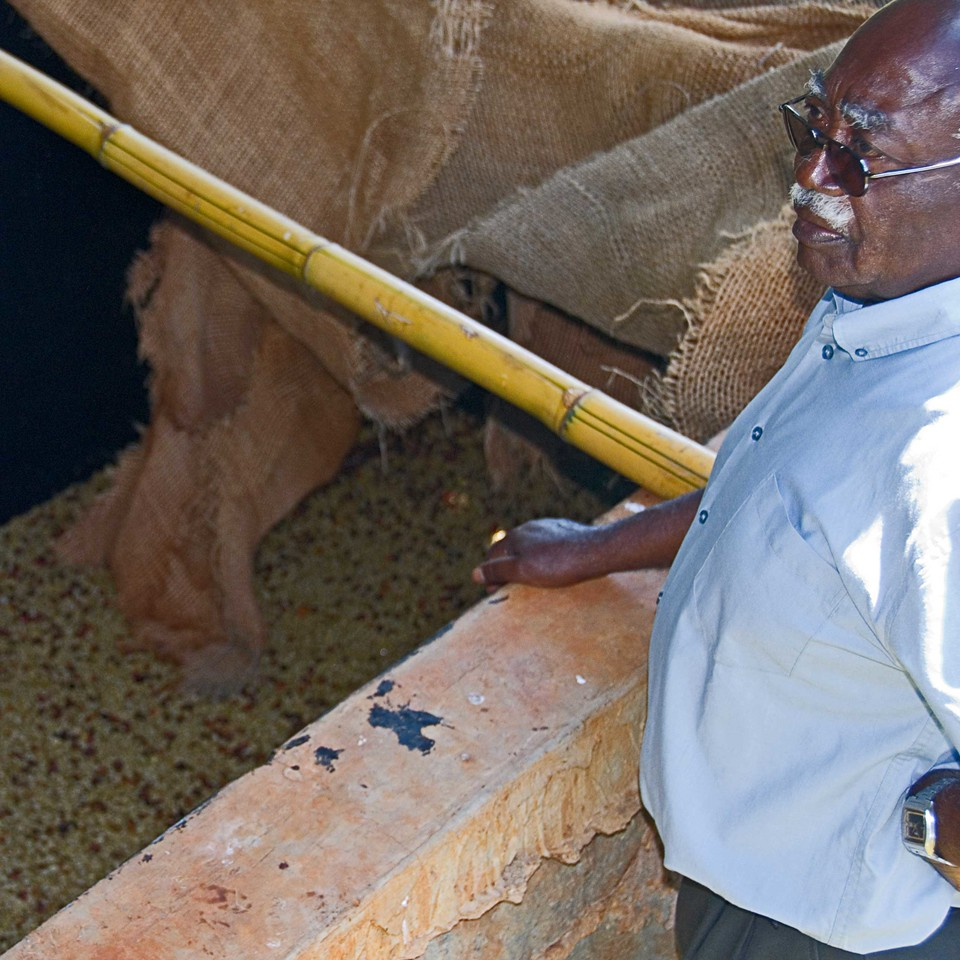 Walter Mathagu checking the fermentation of the coffee beans.  Fermentation can take up to 36 hours.