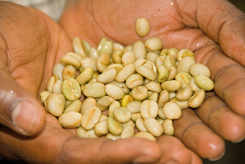 The beans are still coated in mucilage.  Fermentation will allow easy removal with turbulent water.