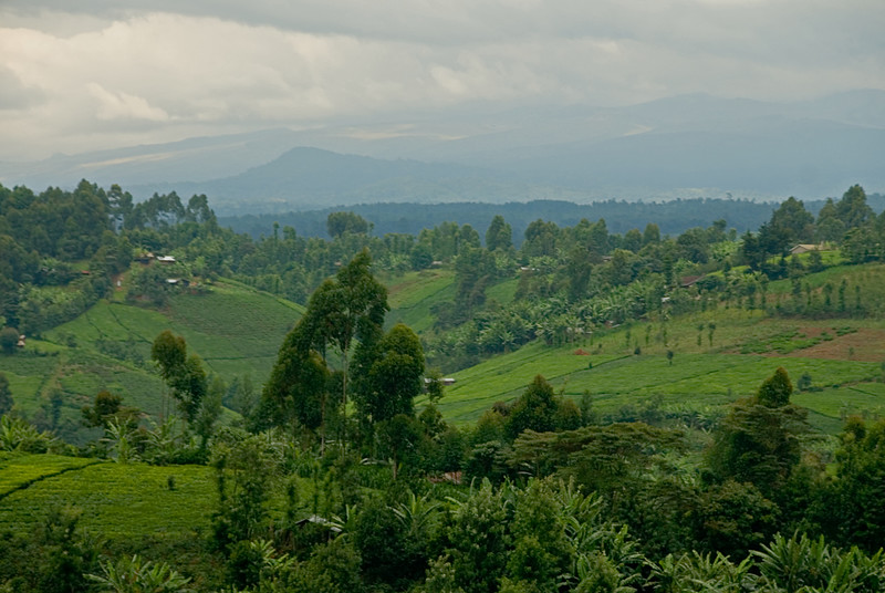 A view of the countryside from Kangocho Factory in the Nyeri district.