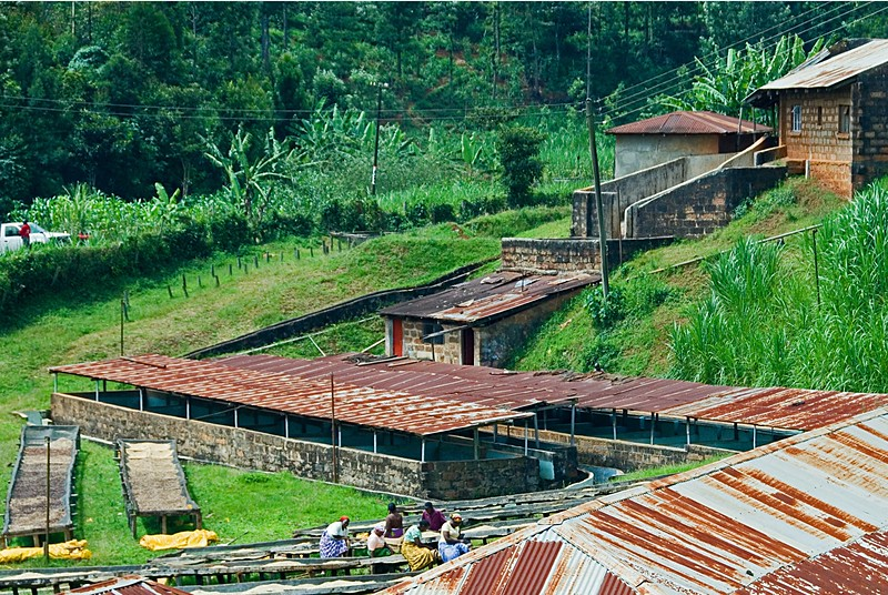 "Kahindu Cooperative Factory.  Two banks of fermentation tanks under roofs are seen here. People are hand sorting newly washed coffee beans at the drying racks.  These ""manicures"" take place at every opportunity throughout the chain of transformations."