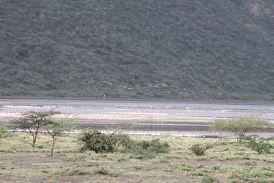 Lake Bagoria Kenya July 2010
