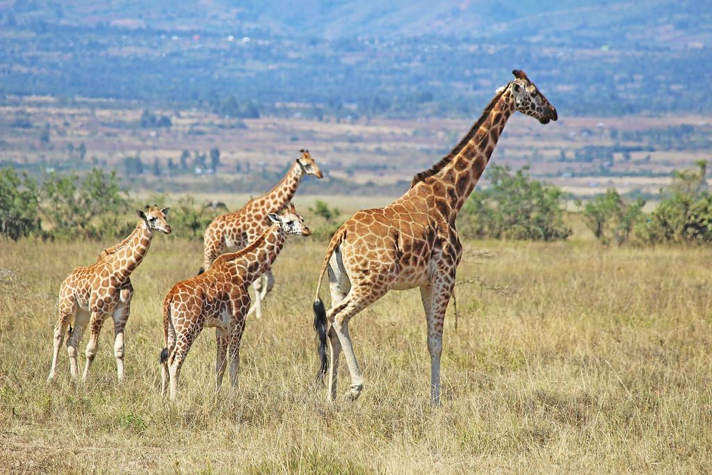 15 Amazing Travel Destinations To See Before You Die - Kenya Safari