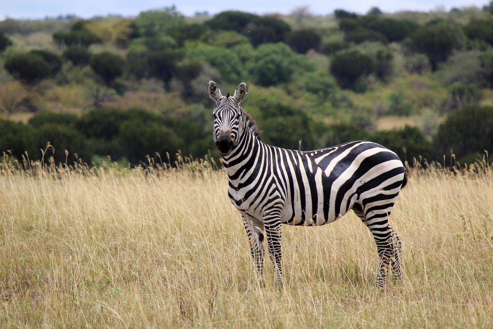 Animals of Kenya: My Encounters at Soysambu Conservancy