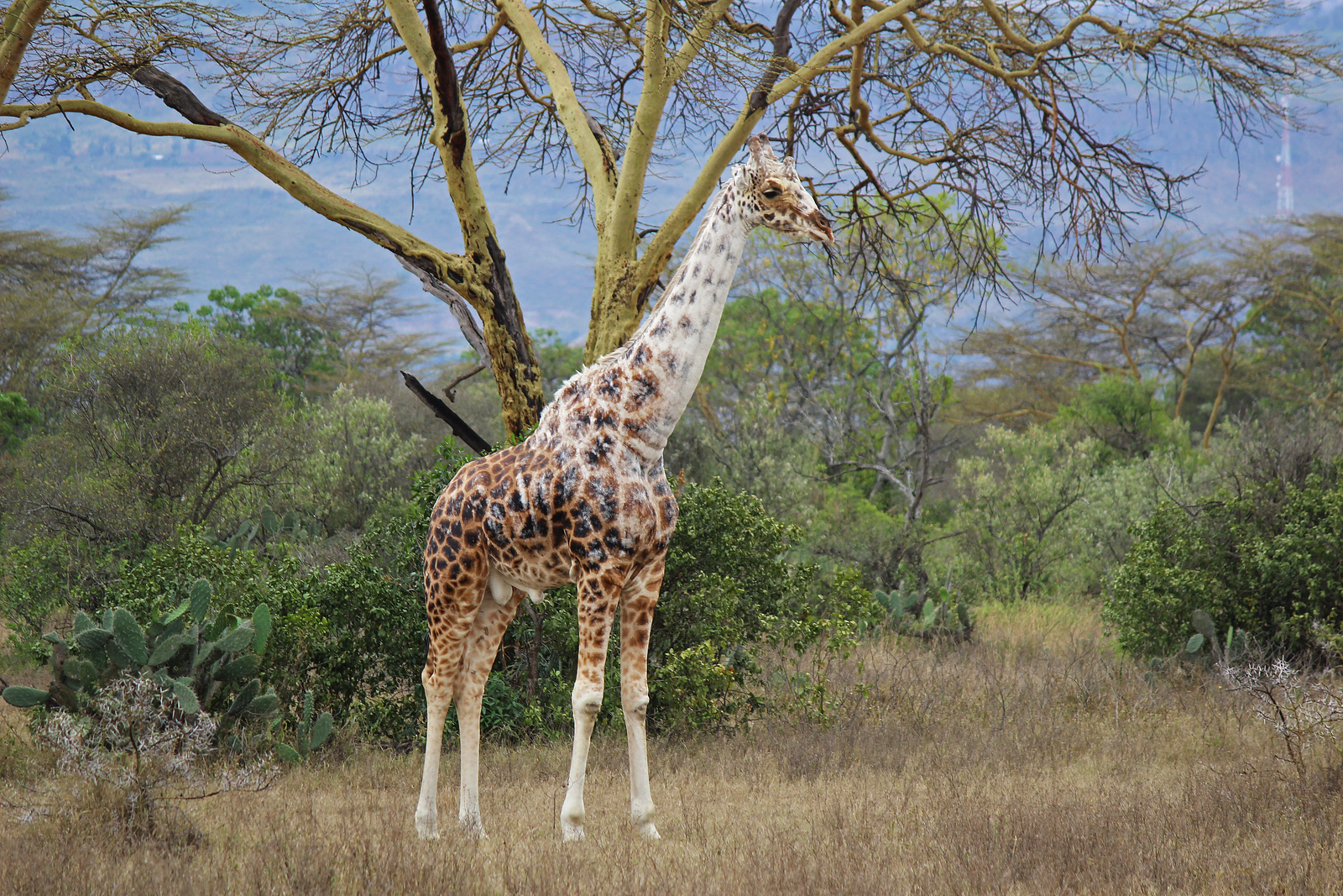 Giraffes, Lions, and Almost Dying: My Adventure in Kenya