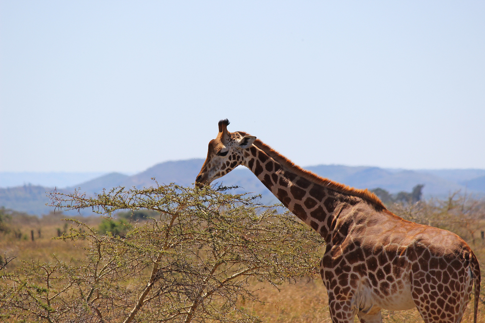 Animals of Kenya: My Encounters at Soysambu Conservancy