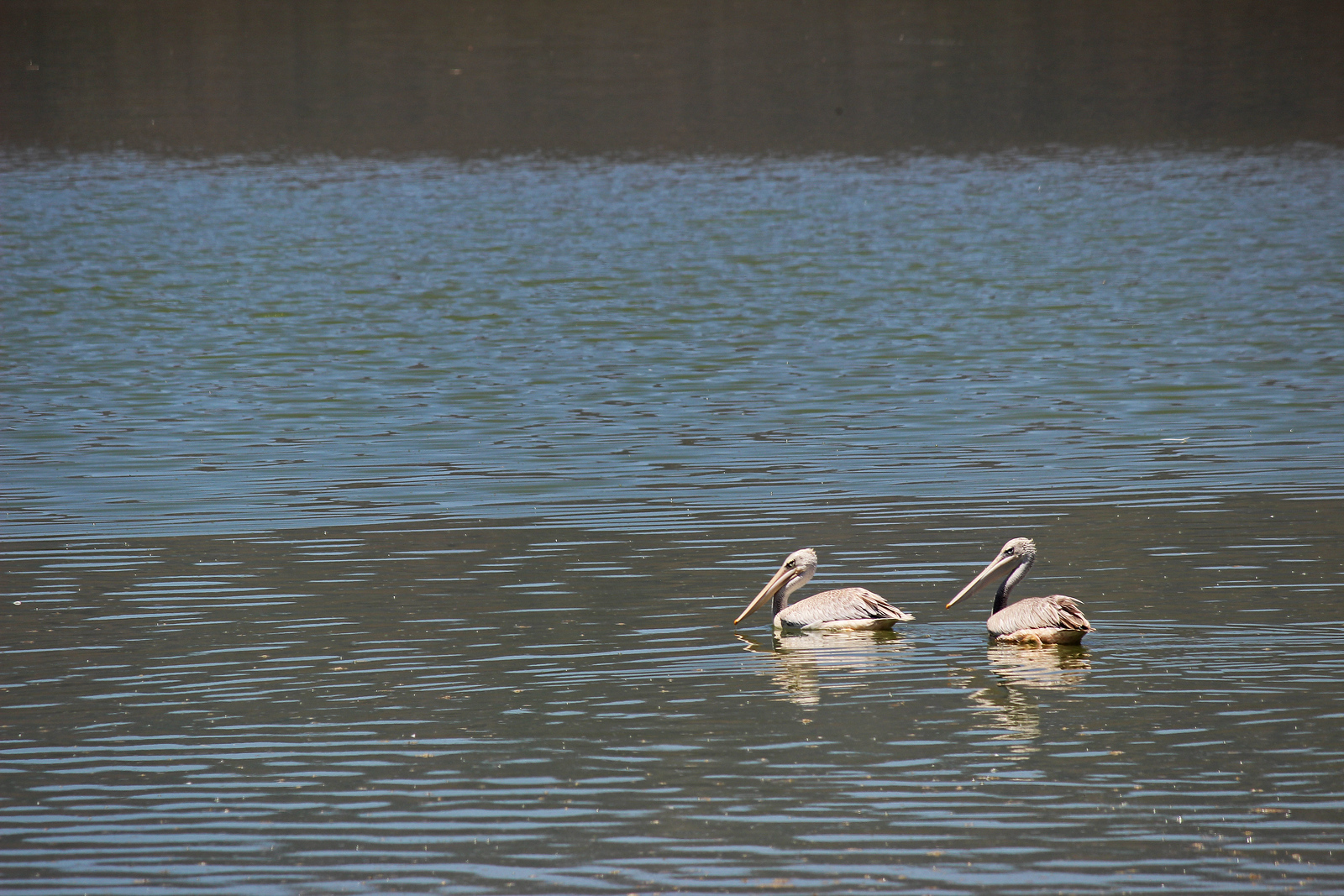 Birds of Lake Elmenteita, Kenya