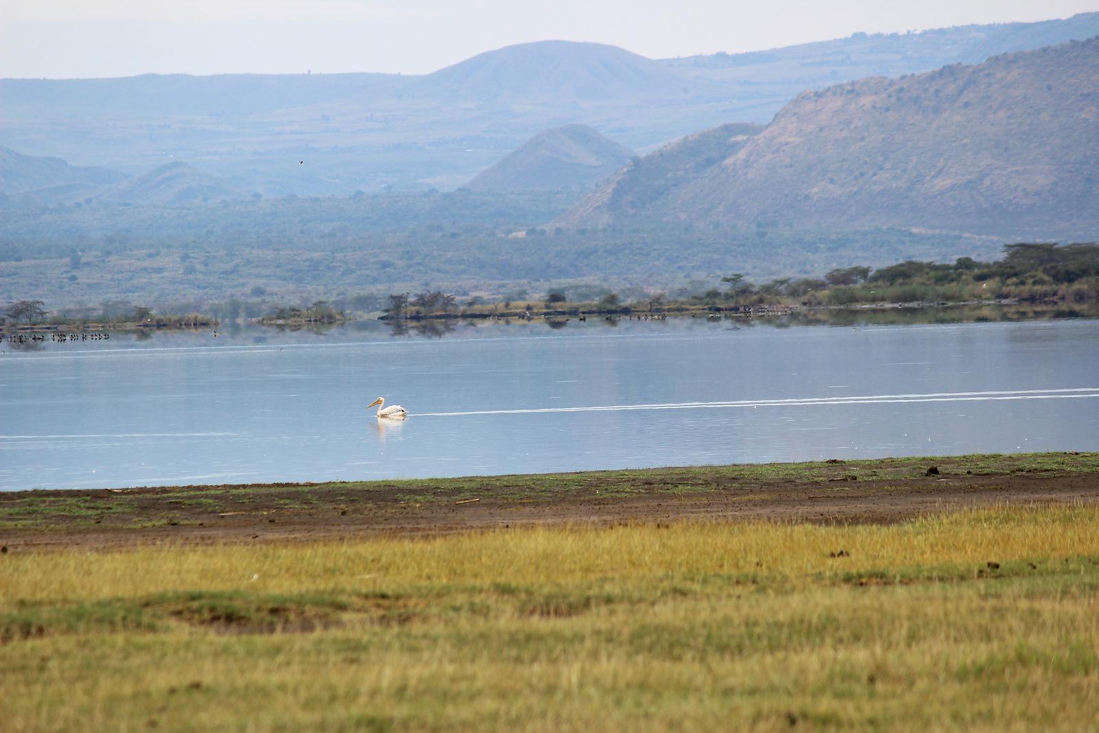 Birds of Lake Elmenteita, Kenya