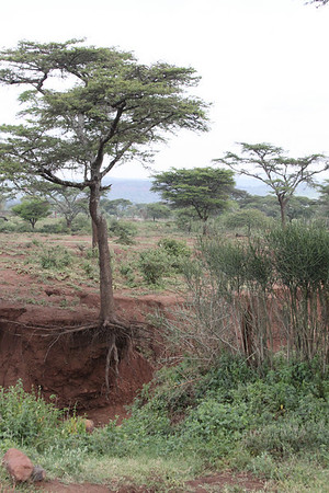 WEMA Kenya July 2010