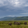 Game drive at Lake Nakuru