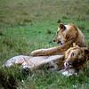 031 Masai Mara