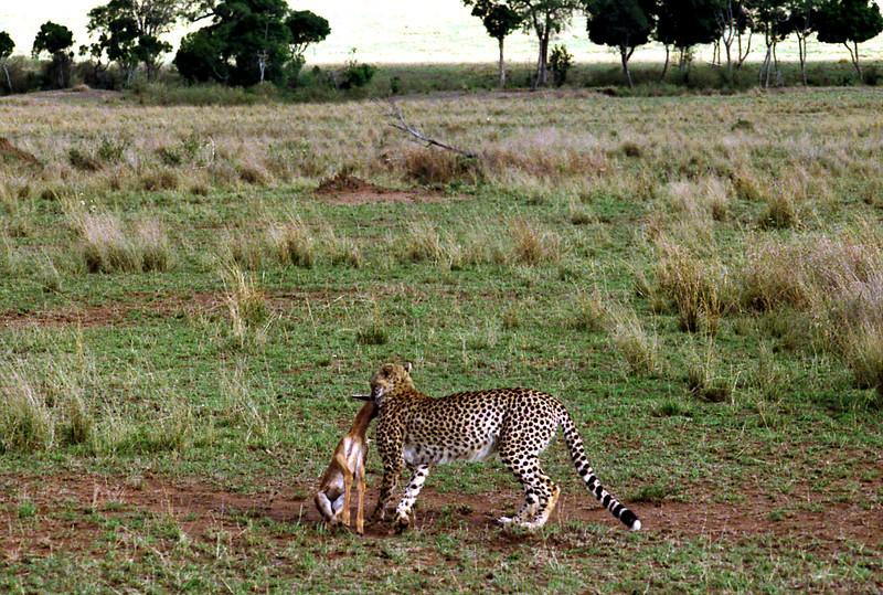 011 Masai Mara