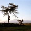 013 Amboseli