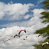 Birds of Lake Nakuru