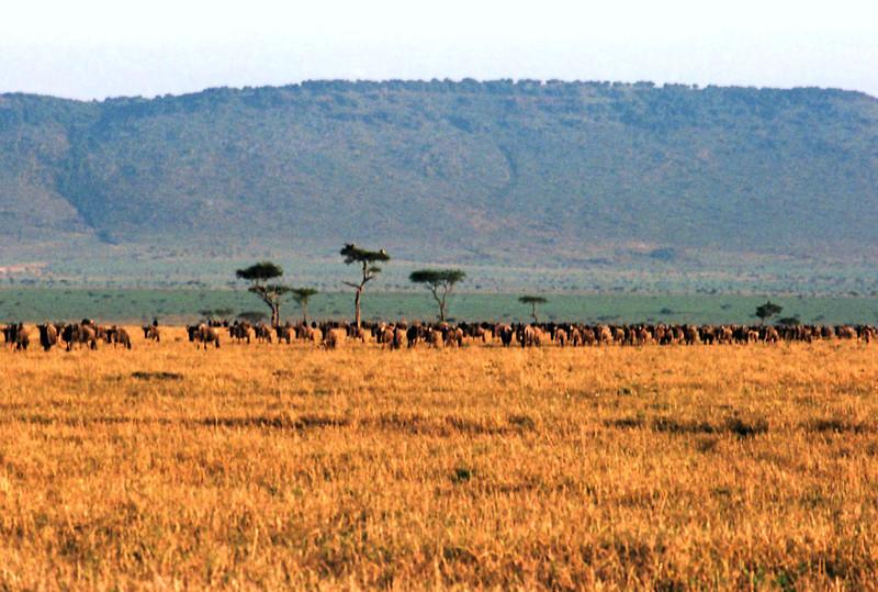 006 Masai Mara