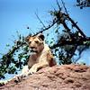 021 Masai Mara