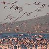 Flamingos in Lake Nakuru National Park, Kenya. By Doug Cheeseman in February 2012.