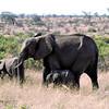 029 Samburu
