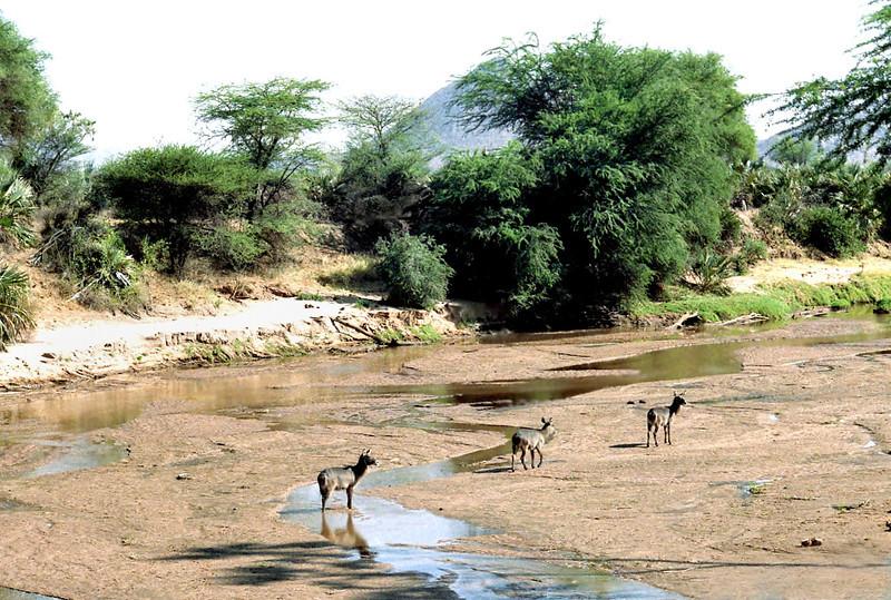 004 Samburu