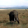 002 Masai Mara