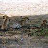 018 Amboseli