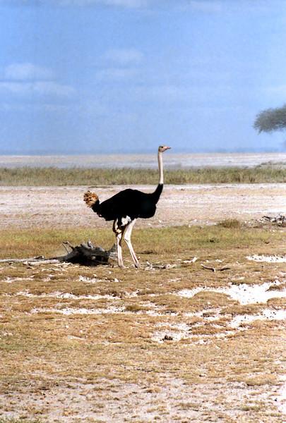 019 Amboseli