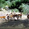 012 Samburu