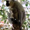 028 Amboseli