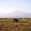 020 Amboseli