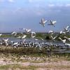 025 Amboseli