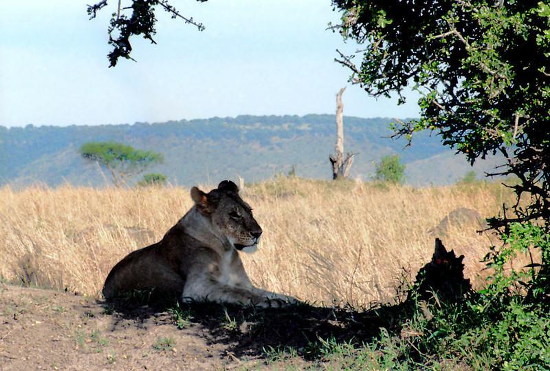 036 Masai Mara