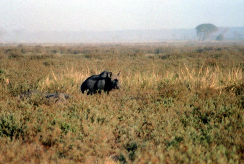 006 Amboseli
