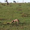 029 Masai Mara