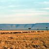 008 Masai Mara