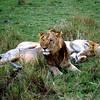 025 Masai Mara