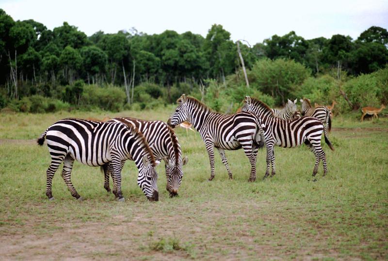 022 Masai Mara
