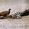 011 Amboseli