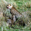 015 Masai Mara