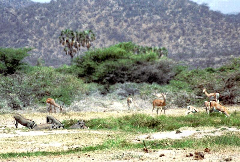 021 Samburu