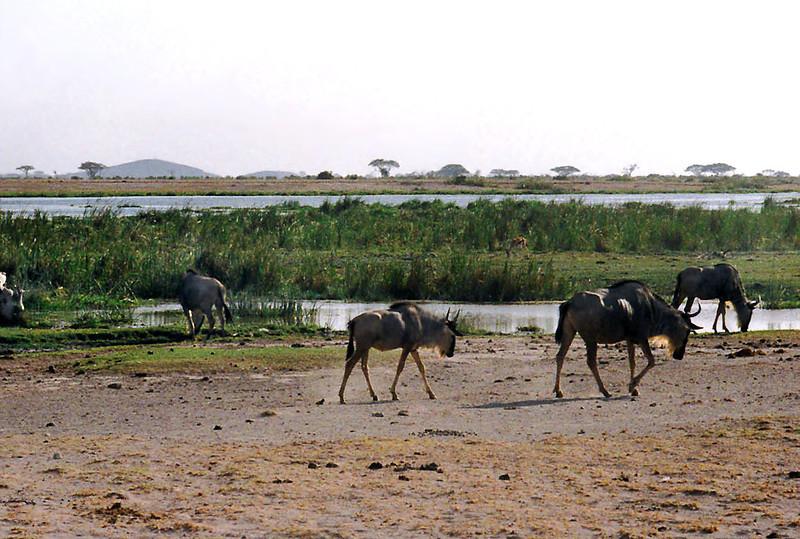 024 Amboseli