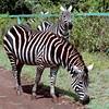 18 Nairobi Nat'l Park