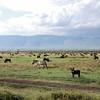 012 Masai Mara