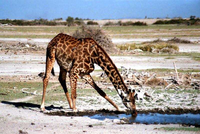 036 Amboseli