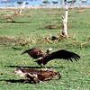 016 Masai Mara