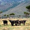 023 Masai Mara