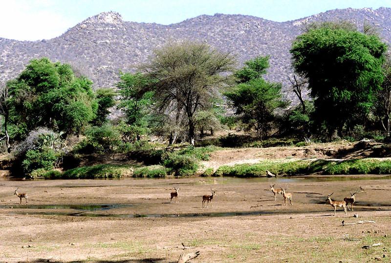 002 Samburu