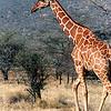 020 Samburu