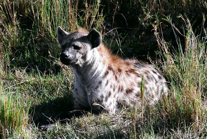 024 Masai Mara